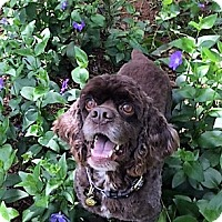 Adopt A Pet :: Kirby-ADOPTION PENDING - Sacramento, CA