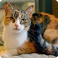 Adopt A Pet :: Quinn - Versailles, KY