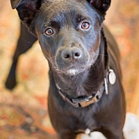 Adopt A Pet :: Badger - Vashon, WA