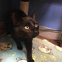 Adopt A Pet :: CILANTRO - Canfield, OH