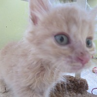 Adopt A Pet :: Teddy - Coos Bay, OR