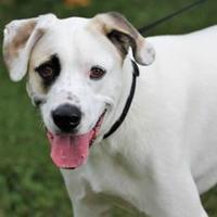 Adopt A Pet :: Rascal - Hastings, MN