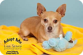 Chihuahua Mix Dog for adoption in Tustin, California - chico