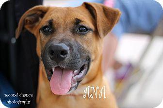 Shepherd (Unknown Type) Mix Puppy for adoption in Wichita Falls, Texas - Ana