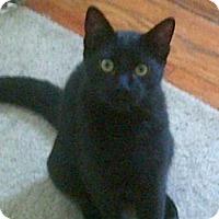 Adopt A Pet :: Squiggy - Kensington, MD