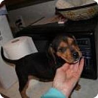 Adopt A Pet :: Cinderella - Marlton, NJ