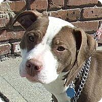 Adopt A Pet :: Tink - Park Ridge, NJ