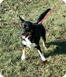 Terrier (Unknown Type, Small) Mix Dog for adoption in Cameron, Missouri - Jessie