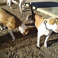 Adopt A Pet :: Bambino & Ernie - Tucson, AZ