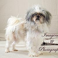 Adopt A Pet :: Brian - Hales Corners, WI