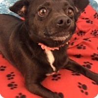 Adopt A Pet :: Myrna - Lake Elsinore, CA