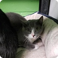 Adopt A Pet :: Ivy - West Des Moines, IA