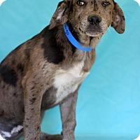 Adopt A Pet :: Fandango - Waldorf, MD
