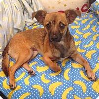 Adopt A Pet :: Sadie - Huntington Beach, CA