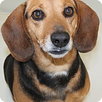 Adopt A Pet :: Margarita - Victoria, TX
