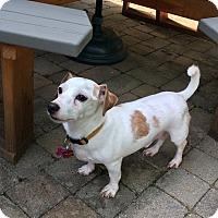 Adopt A Pet :: Elvis - Beachwood, OH