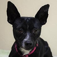 Adopt A Pet :: Pretzel - Gridley, CA