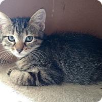 Adopt A Pet :: April - Des Moines, IA