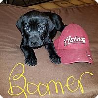 Adopt A Pet :: Puppy Boomer - Austin, TX