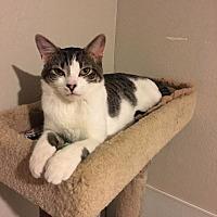 Adopt A Pet :: Colt - Crocker, MO