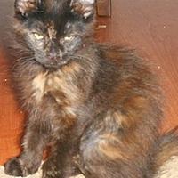 Adopt A Pet :: Randa - North Highlands, CA