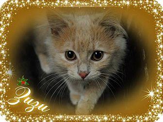 Domestic Mediumhair Kitten for adoption in Washington, D.C. - Zuzu