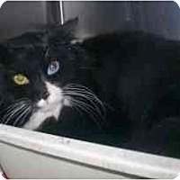 Adopt A Pet :: Sparkle - Markham, ON