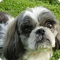Adopt A Pet :: Galileo - Madison, WI