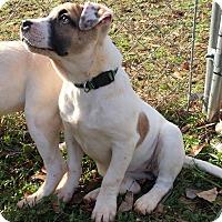 Adopt A Pet :: Reba - Simpsonville, SC