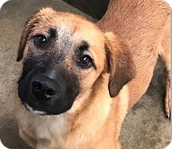 Hound (Unknown Type) Mix Dog for adoption in Brooklyn, New York - Josephine