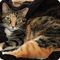 Adopt A Pet :: Dusty - Mission, KS