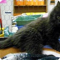 Adopt A Pet :: Temoto - Oskaloosa, IA