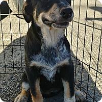 Adopt A Pet :: Jenette - Ogden, UT