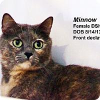 Adopt A Pet :: Minnow - Lincoln, NE