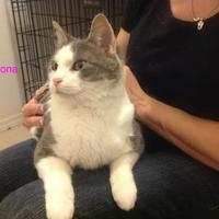 Adopt A Pet :: Fiona - Crossfield, AB