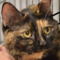 Adopt A Pet :: Pearl - Madison, WI