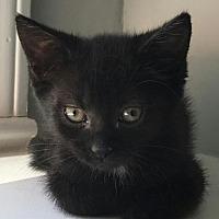 Adopt A Pet :: Sarah - Lexington, KY