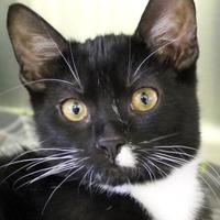 Adopt A Pet :: Rizzo - Victoria, TX