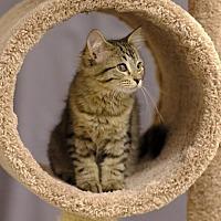 Adopt A Pet :: Hermione C1808 - Shakopee, MN