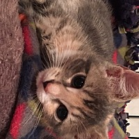 Adopt A Pet :: Sara (GT) - Little Falls, NJ