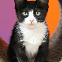 Adopt A Pet :: Grammy - Vinton, IA