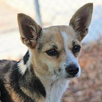Adopt A Pet :: LEXI - Red Bluff, CA