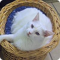 Adopt A Pet :: Sinatra - Memphis, TN