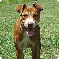 Adopt A Pet :: AJAX - Glastonbury, CT