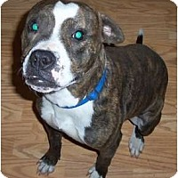 Adopt A Pet :: Sophie - Claypool, IN