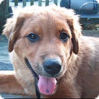 Adopt A Pet :: Dopey - Washington, IL