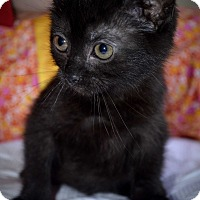 Adopt A Pet :: Blacky - Xenia, OH