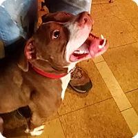 Adopt A Pet :: Helen - Fenton, MI