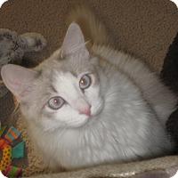 Adopt A Pet :: Witchypoo - North Highlands, CA