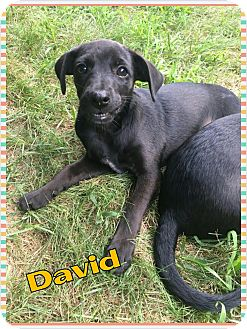 Terrier (Unknown Type, Medium) Mix Puppy for adoption in bridgeport, Connecticut - David